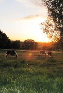 Horses-on-la-Roseraie-203x300